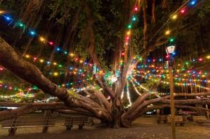 Banyan Tree Lighting Ceremony, Lahaina, Maui